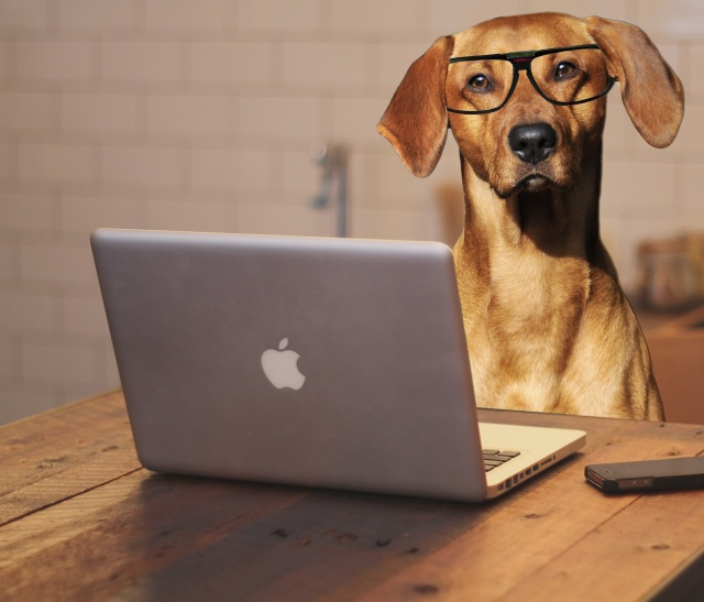 dog-using-laptop-computer-karen-arnold
